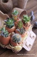 eggplanter.jpg