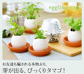eggling.jpg